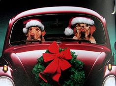 Dogs going Christmas Shopping.