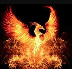 See Phoenix Bird Art Prints at FreeArt. Get Up to 10 Free Phoenix Bird Art Prints! Gallery-Quality Phoenix Bird Art Prints Ship Same Day. Phoenix Artwork, Phoenix Wallpaper, Phoenix Images, Phoenix Rising, Fantasy Creatures, Mythical Creatures, Phoenix Tattoo Design, O Pokemon, Fire Art
