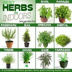 Best herbs for indoors