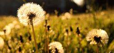 Sabías las causas de las alergias al polen? Descúbrelo en nuestro artículo de hoy! http://www.vitasalud.com/alergias-al-polen-sabias-que/