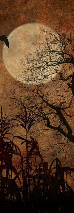 Autumn Moon…