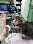 Where I work (Olympic Veterinary Clinic) even the animals high five ya for a job well done!