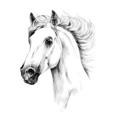 - Millions of Creative Stock Photos, Vectors, Videos and Music Files For Your Inspiration and Projects. Horse Head Drawing, Horse Drawings, Pencil Art Drawings, Horse Sketch, Horse Illustration, Horse Profile, Rooster Art, Beginner Painting, Sketchbook Inspiration