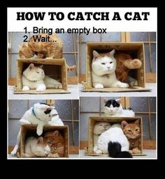How to catch a cat: 1. bring an empty box. 2. wait....