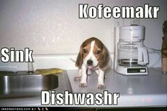 Beagle dishwasher