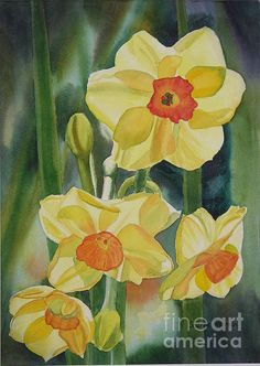 Yellow And Orange Narcissus by Sharon Freeman