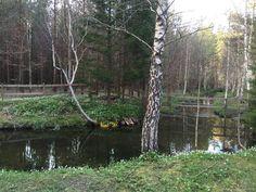 Spring Time, Sweden, Plants, Plant, Planets