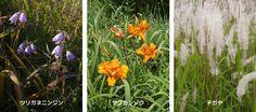 在来種草地の構成種 especmic