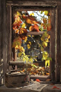 "~Autumn Leaves, peeking in the window to say ""so long for now""~"