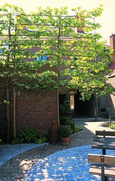 garden care view Gently Screening Out A View Of A House With… - Hof Large Indoor Plants, Big Plants, Tall Plants, Garden Plants, Shade Garden, Contemporary Garden Design, Small Garden Design, Garden Care, Back Gardens