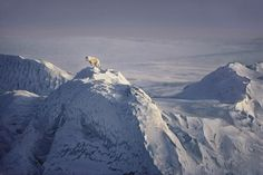Photo Insight with Jim Brandenburg - Arctic Wolf - Amateur Photographer Wolf Images, Wolf Pictures, Wild Life, Winter Photography, Amazing Photography, National Geographic, Alaska, Arctic Wolf, Beautiful Wolves
