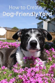 Dog Owners: Maintain a Beautiful Yard with These Ground Covers, Grasses and Other Tips