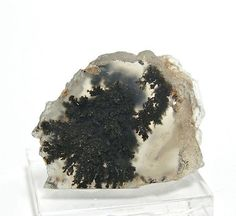 Black Dendritic Moss Agate Very Rare Marfa Texas by FenderMinerals,