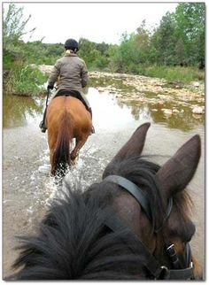 c4410d5ee1 Group horse riding Horse Riding