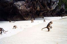 monkey beach thailand -