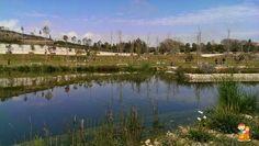Alicante con niños: El parque inundable de La Marjal   Con los niños en la mochila