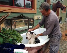 Dog bath, i love the idea of just setting up an old bath tub outside, but for the winter in iowa this would be useless...