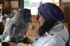 Meeting the rescued Great Gray Owl   Flickr - Photo Sharing!