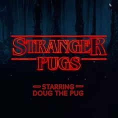 Stranger Pugs > Stranger Things
