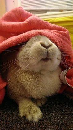 I love bunny noses! And bunny everything.