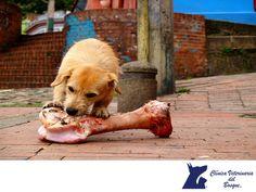 LA MEJOR CLÍNICA VETERINARIA DE MÉXICO. Sobre el mito de: NO dar huesos a nuestros perros. Todos los huesos se astillan fácilmente y más si están hervidos; por lo que debes evitar el darle huesos, no queremos que tu mascota ingrese a quirófano por consumo de huesos. En Clínica Veterinaria del Bosque, te invitamos a comunicarte con nosotros a los teléfonos 5360-3311 y 5240-0404 para agendar una cita con nuestros especialistas y te guíen en una correcta alimentación para tu mascota…
