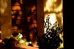 Flowering darkness @eduardoxavierph