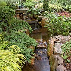 A stream trickles through this shade garden illuminated by yellow hostas and golden Japanese forest grass.