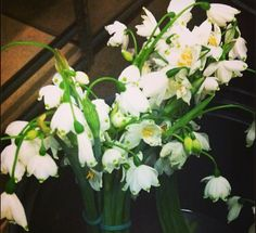 White Snowdrops Flowers, #Snowdrops
