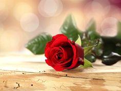 love red rose flowers - Pesquisa Google