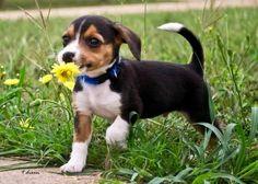 Pickin flower for momma