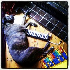 A hard days night jam A Hard Days Night, I Laughed, Dog, Diy Dog, Doggies, Dogs