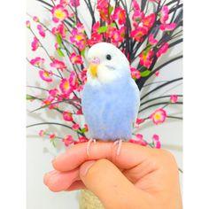 http://tootricky.tumblr.com/post/121219415750/via-kevins-birds-kevinsbirds-instagram-photos
