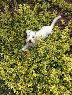 Great Dog in the green