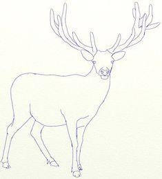 Rentier zeichnen lernen-dekoking-com-2