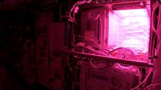 Want an out-of-this-world salad? Learn about the crops grown at the International Space Station