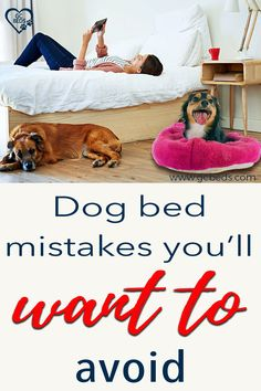 Learn what all goes into a good dog bed in order to combine comfort and value (and avoid probmls with smells or even sickness) and enter the context to win one for free Cute Dog Beds, Cute Dogs, Largest Great Dane, Personalized Dog Beds, Indestructable Dog Bed, Dog Rooms, Mistakes, Your Pet, Room Ideas