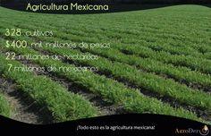La #SeguridadAlimentaria y tu comida nacen en el #campo, de la mano de un productor. #DiaMundialDeLaAlimentacion