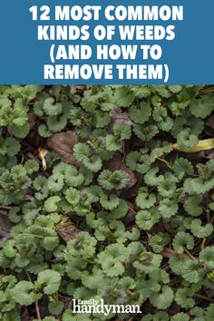 Learn to identify a dozen common U. weeds and find out how to rid your yard of everything from dandelions and crabgrass to nettles and ragweed. Landscaping Tips, Front Yard Landscaping, How To Remove Grass, Weed Science, Lawn Care Business, Lawn Fertilizer, Weed Seeds, Weed Killer, Most Common