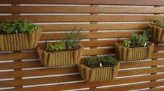 Como montar uma horta em casa – Fotos e modelos