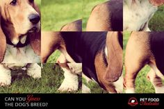 Can you guess? #dogs #breeds