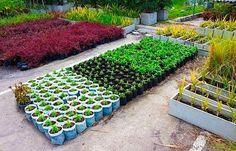 Выращивание овощей по Джону Джевонсу