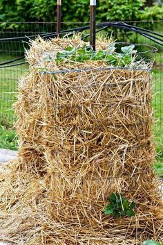 How to make a potato tower #Organic_Gardening