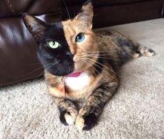 Кошка Венера - стала знаменитостью