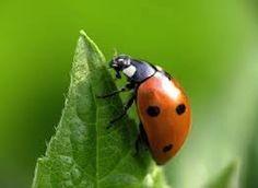 Resultado de imagen para insects
