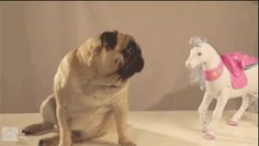 And this pug and his totally real unicorn suitor. | The 14 Cutest And Most Surprising BFFs In The Animal Kingdom
