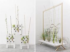 Decorating house with interior Plants to Purify the Air   drawhome.com