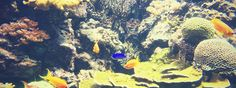 Aquarium Tipps für Einsteiger