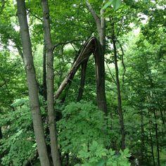 Folded tree at Riverwood