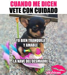 Haha Funny, Funny Dogs, Funny Animals, Cute Animals, Funny Images, Funny Pictures, Funny Parenting Memes, Spanish Jokes, Laughter The Best Medicine