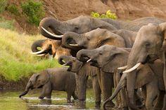 afrikaanse dieren - Google zoeken